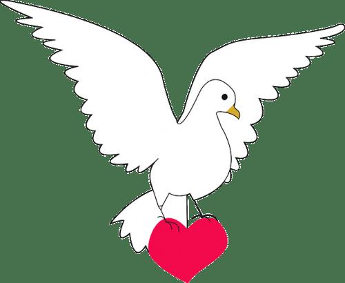 dove-159071_640