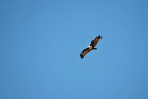 eagle-84450_640