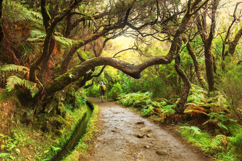 Hiking - Ilha da Madeira - natureza