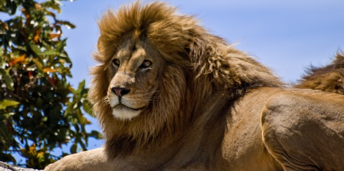 Take charge of your life like a lion