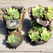 How to Plant Hens and Chicks In a Boot