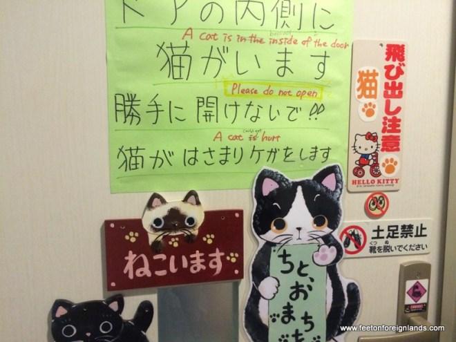 Hepineko Cat  Cafe in Tokyo (13)