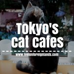 Tokyo's cat cafes – why we paid money to pat a kitty