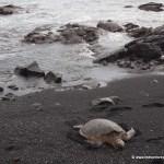 Memorable moment – Punalu'u black sand beach, Hawaii