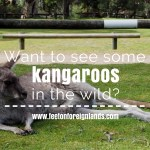 Where can I see kangaroos in Melbourne?