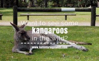 see kangaroos in Melbourne: www.feetonforeignlands.com