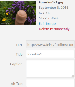 A screenshot of the backend information for an old uploaded photo in WordPress of the tip of a Tantus Uncut dildo among colourful flowers. The caption and alt text boxes for the image are all empty.