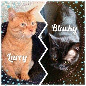 Larry&Blacky