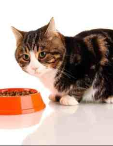 also best cat foods in guide  reviews of top dry wet products rh felineliving