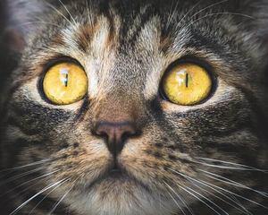 5 types of cat