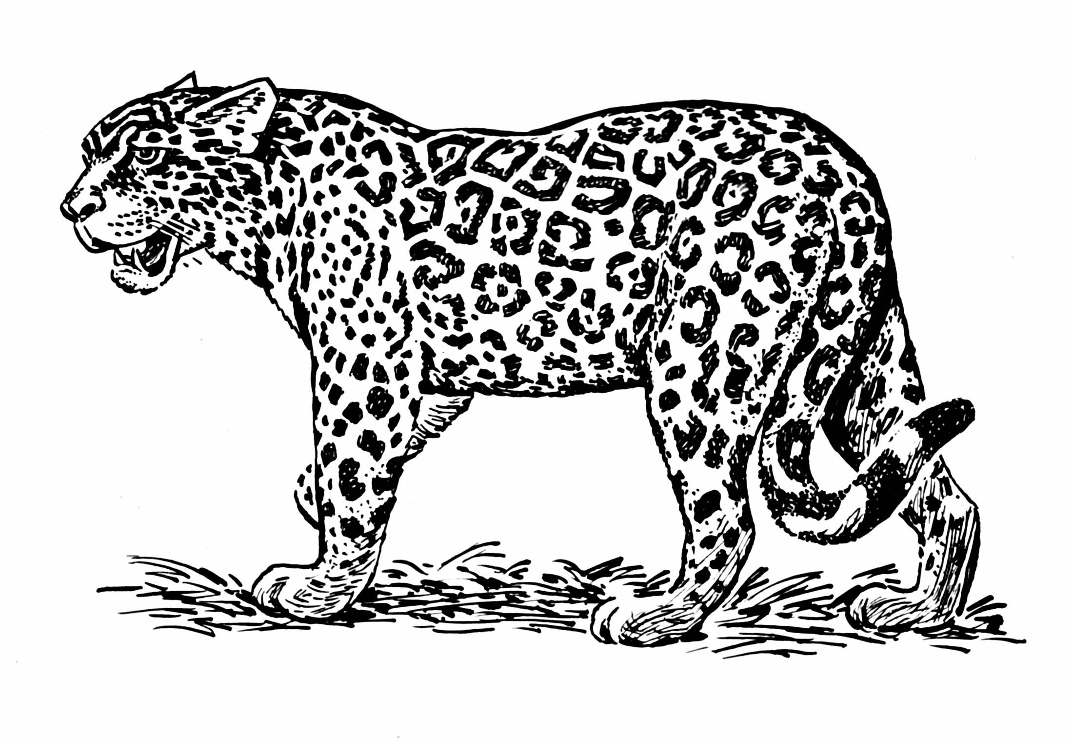 Big Cat Line Drawings
