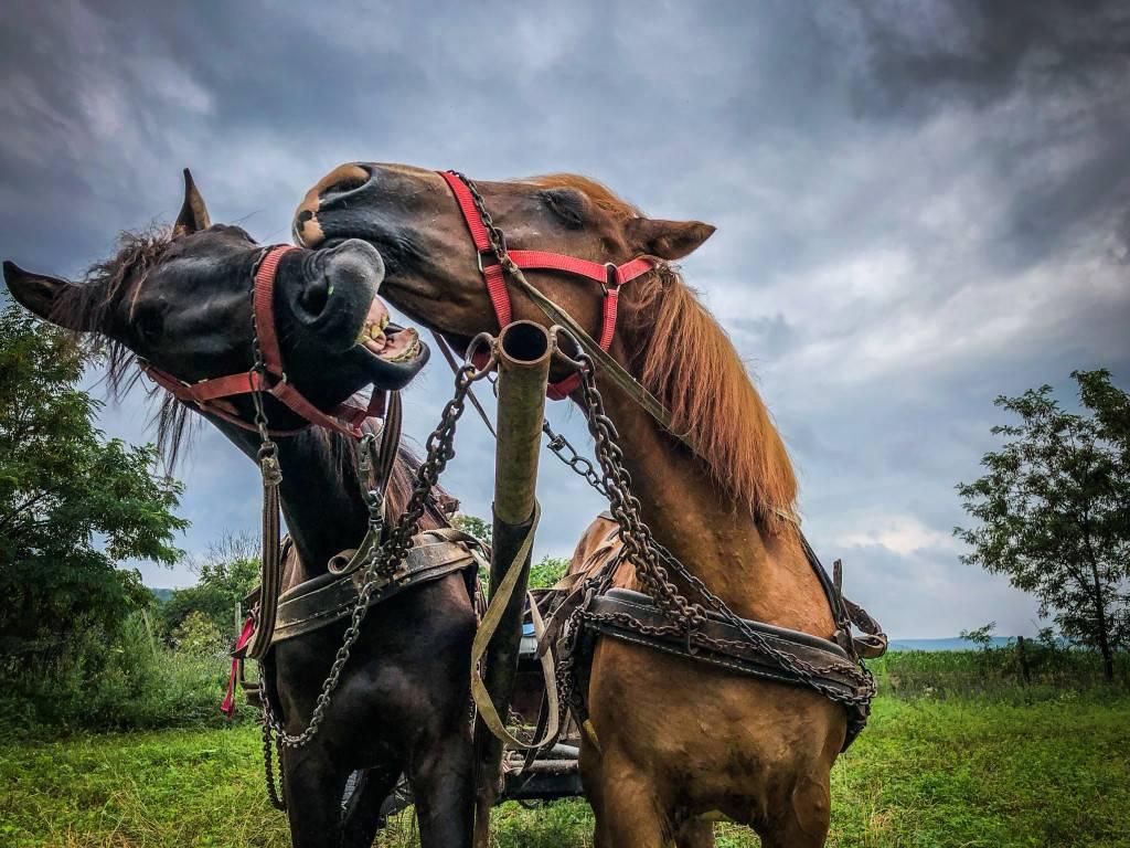 Horses' Talk - picture