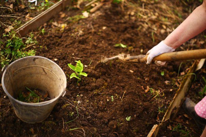 Como fazer uma horta medicinal