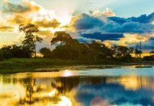 4 passeios imperdíveis no Pantanal Matogrossense