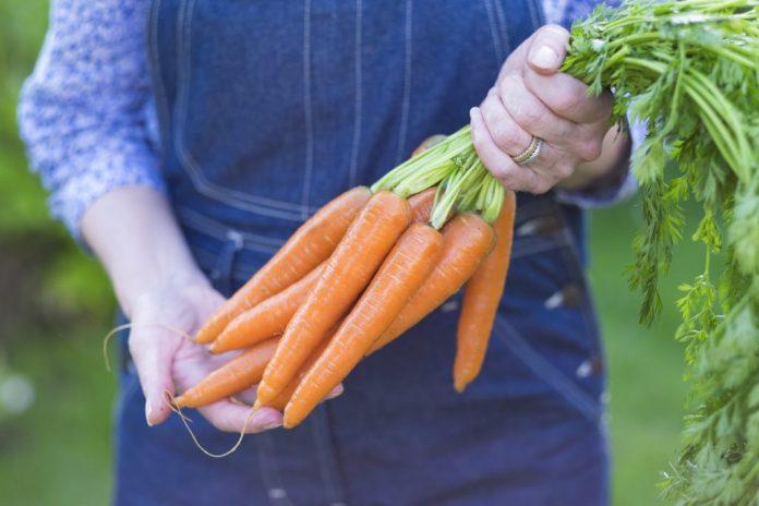 A cenoura e seus 10 benefícios para o organismo