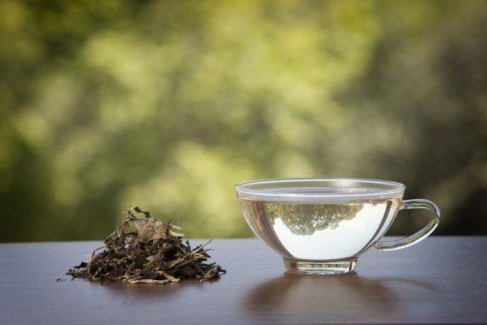 Chá Branco – Entenda suas particularidades