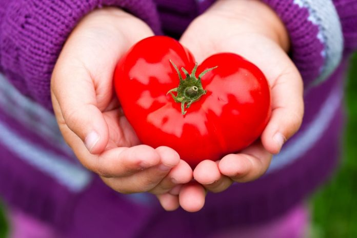 Tomate – Veja por que vale a pena aumentar o consumo