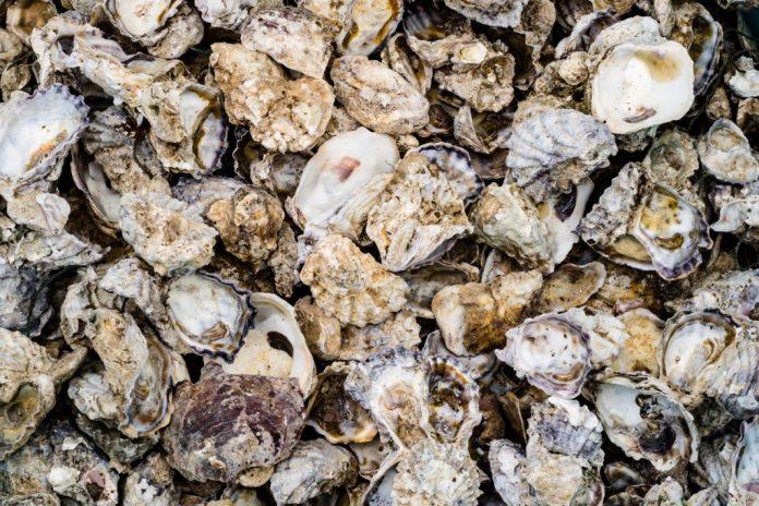 Cálcio de Ostras em pó - Benefícios