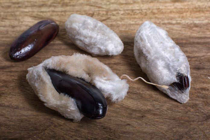 Ingá – Fruto exótico que combate dores