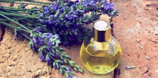 Alfazema – 10 benefícios e formas de usar