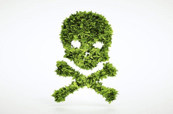 10 Plantas tóxicas que temos em casa