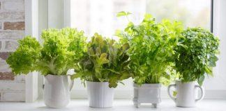 Calmante ou Estimulante – Plantas surpreendentes