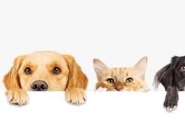 Animais de estimação para apartamento - Tipos
