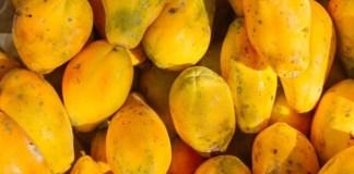 Mamão – A fruta remédio para o corpo