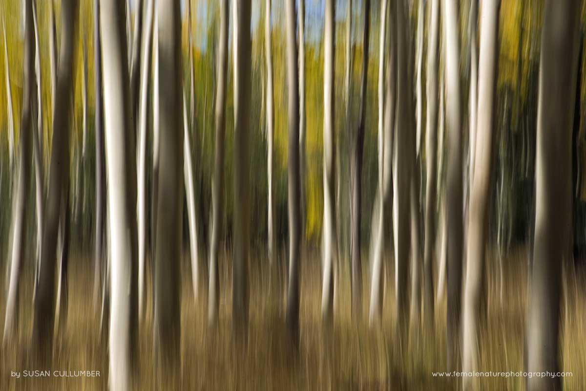 Susan Cullumber Female Nature Photography