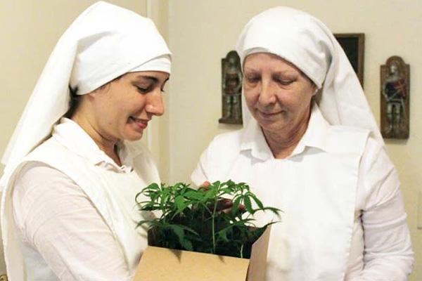 Cannabis, le monache che coltivano e vendono a scopo medico