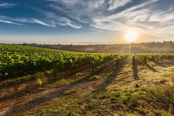 Cartizze: perché è un vino che piace
