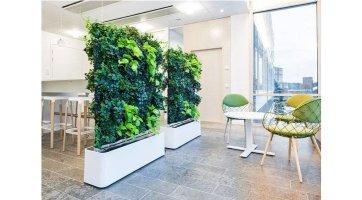 Pflanzenwand selber bauen Das wichtigste Know how für den ...
