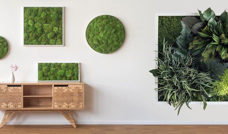 Pflanzenwand selber bauen Das wichtigste Knowhow fr den