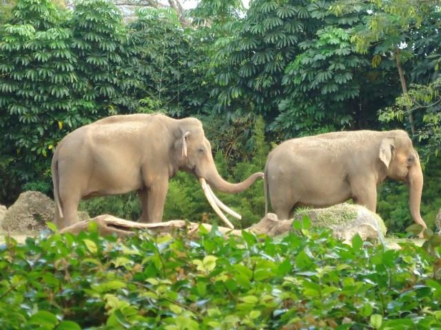 Elefantes zoo Miami