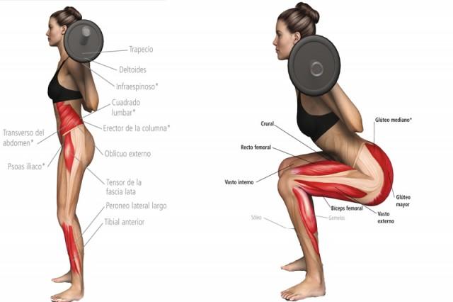 anatomia-sentadilla_thumb_e (1)
