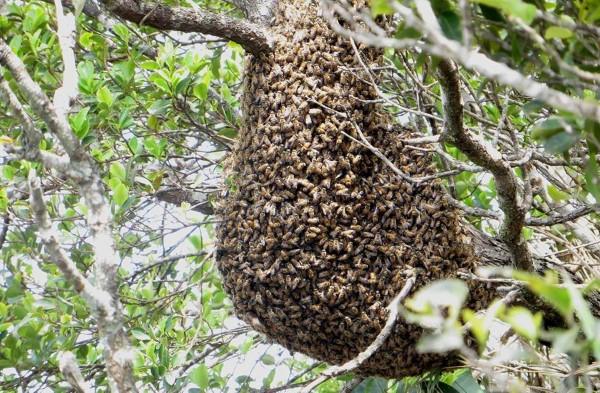 abelhas_escalavrado