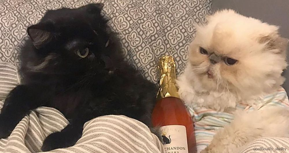 cat wine