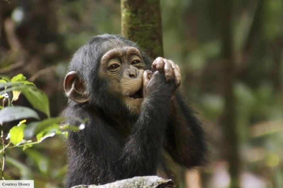 best nature netflix documentaries