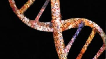 genoma y sintesis