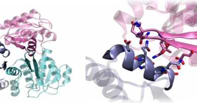 proteina 1