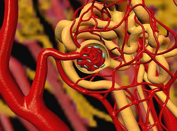 arterias renales