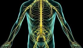 nervios perifericos