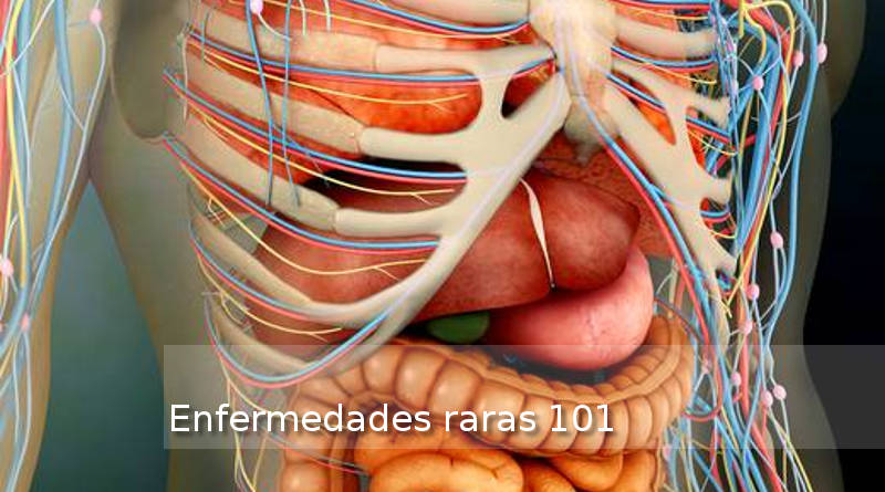 Perspective-view-of-human-body-whole-organs-and-b_art-interior-cuerpo-humano_800x445_femexer