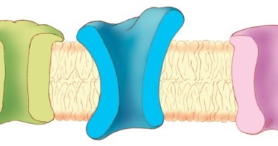 Síndrome de Romano-Ward