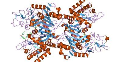Deficiencia de fosfoenolpiruvato carboxiquinasa