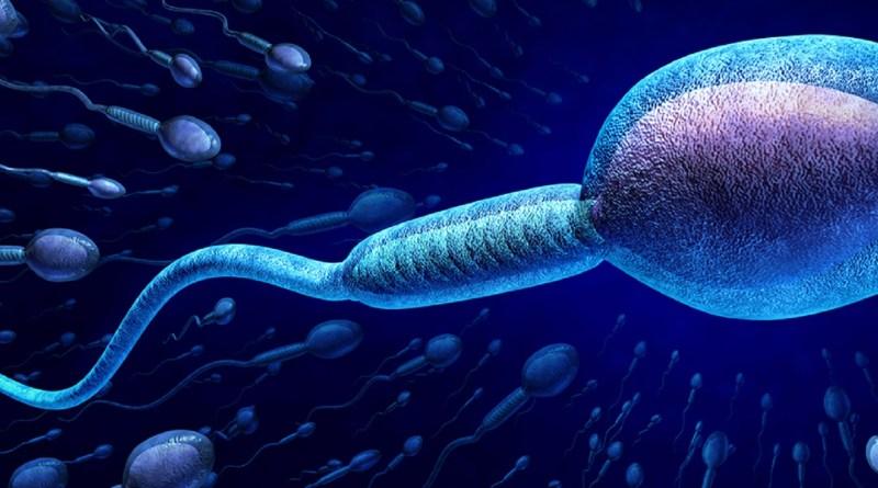 Infertilidad masculina con teratozoospermia por una única mutación genética