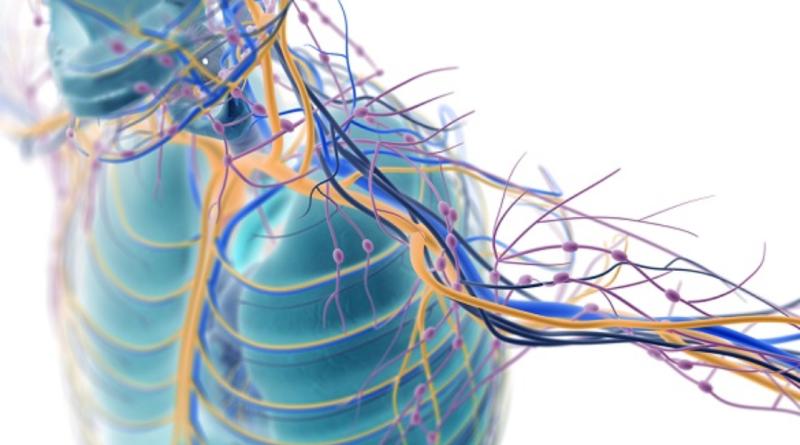 terapia-genica-bloqueadora-de-dano-nervioso-podria-ser-util-en-una-variedad-de-enfermedades-raras