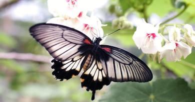 Enfoque en objetivo terapéutico para el síndrome de mariposa