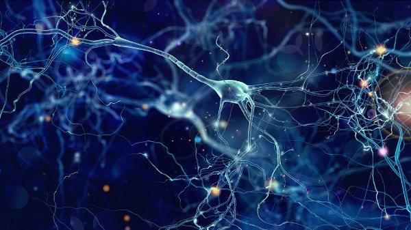 Resultado de imagen para Neuronas motoras