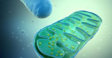 Un medicamento para la enfermedad renal podría tener un futuro tratamiento de los trastornos mitocondriales